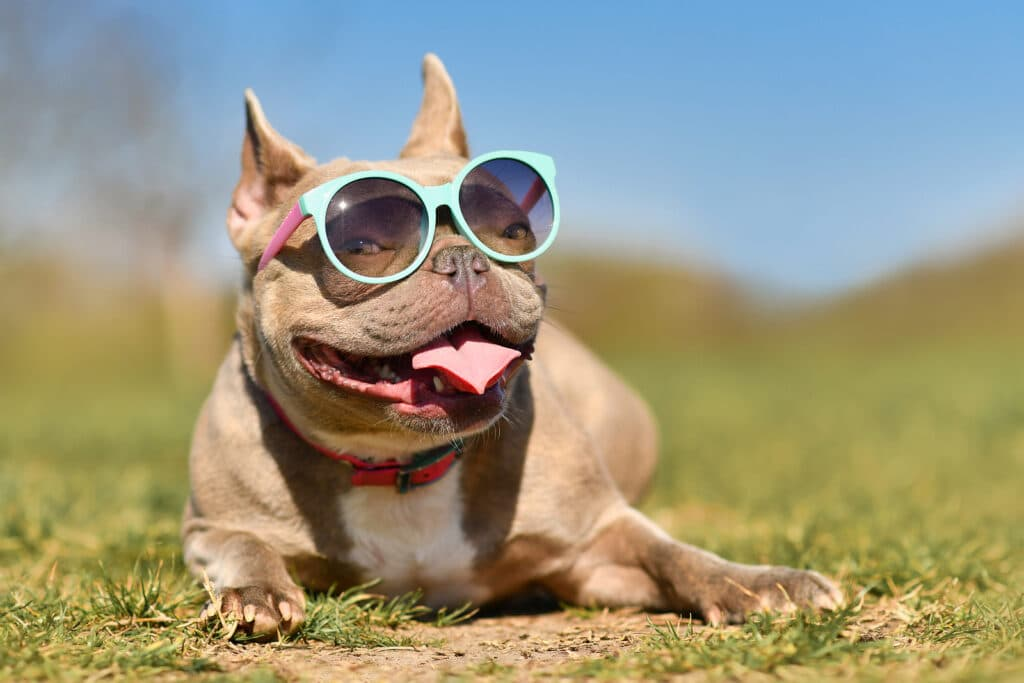 Home Care Marketing Online- 89 Cool Tasks You Can Do in the Hot Summer Months 3